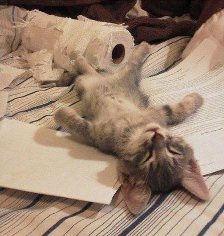 котёнок спит у рулона туалетной бумаги