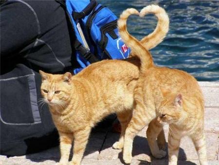 """кошка и кот с хвостами пересекающимися """"сердечком"""""""