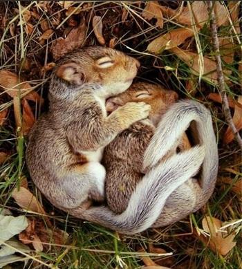 спящие сурки