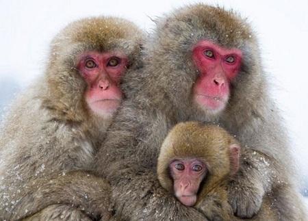 макаки на холоде