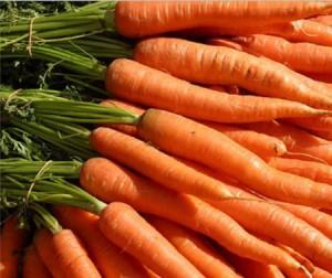 молодая морковь