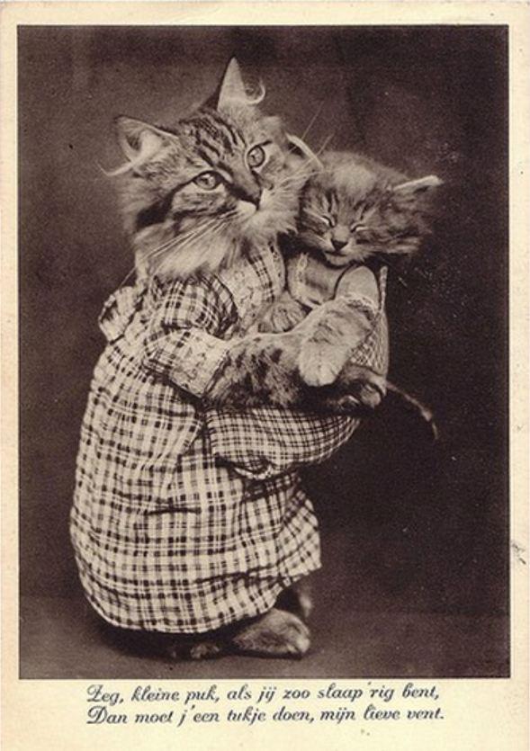 старинные фото кошек