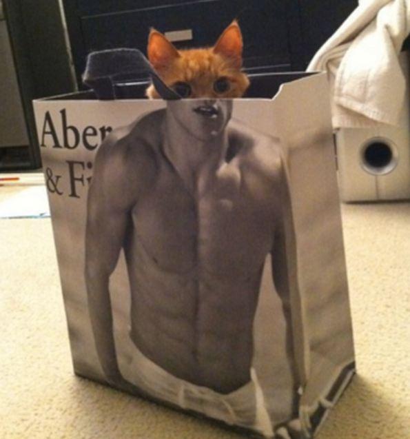 кот выглядывает из сумки
