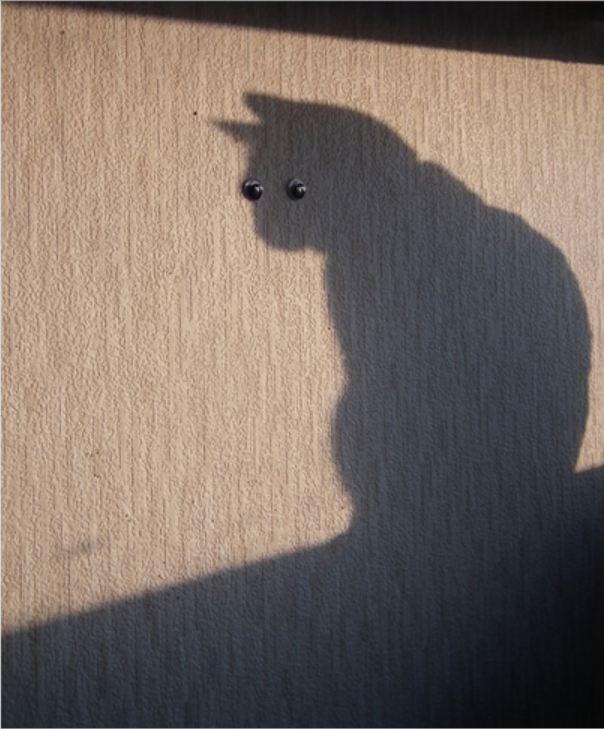кошачья тень