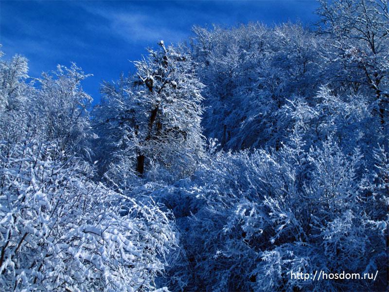 снежная зима утро 27