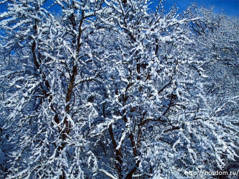 снежная зима утро 28