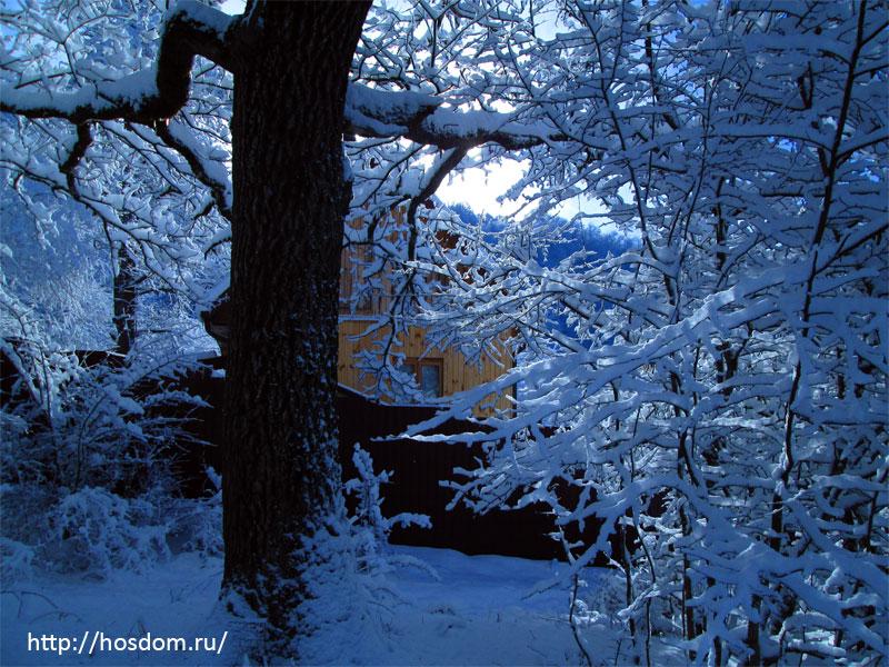 снежная зима утро 6