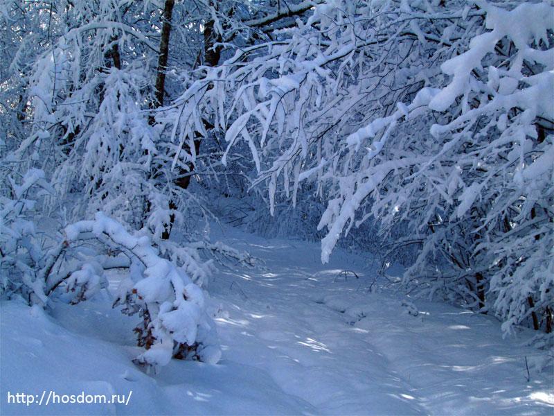 снежная зима утро 17
