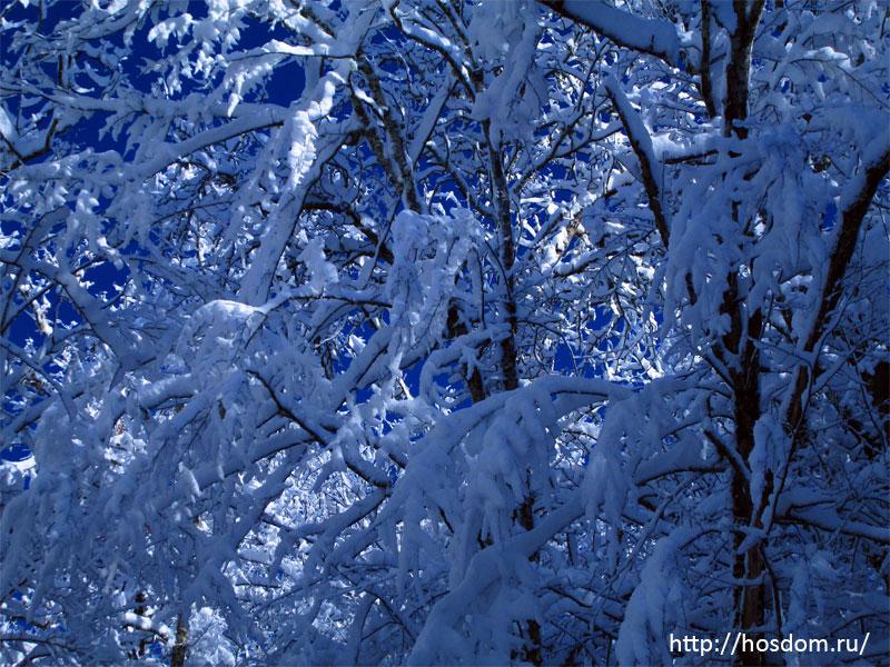 снежная зима утро 18