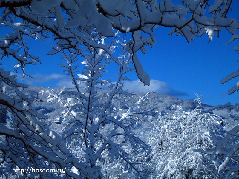 снежная зима утро 19