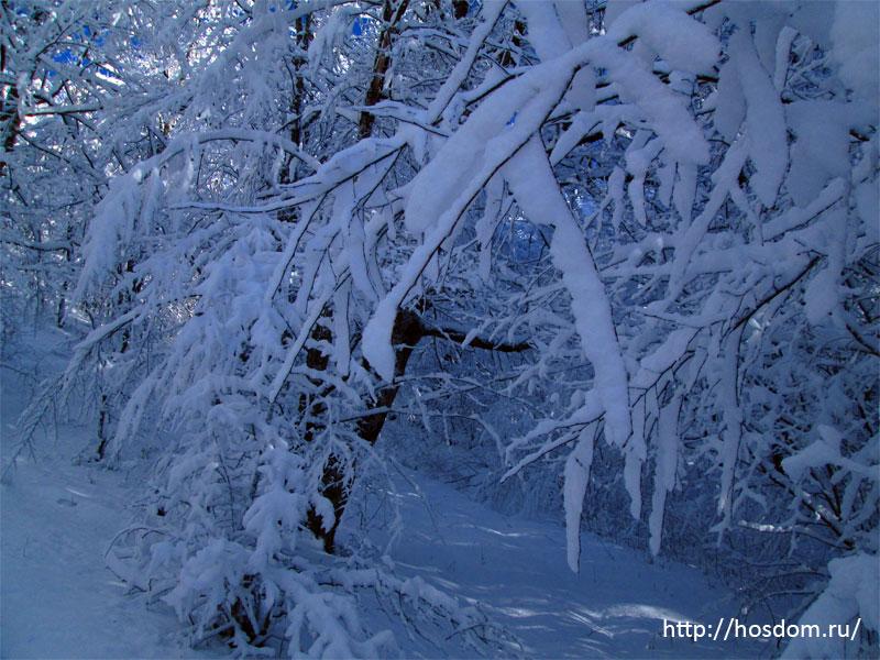 снежная зима утро 20