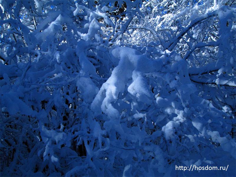 снежная зима утро 21