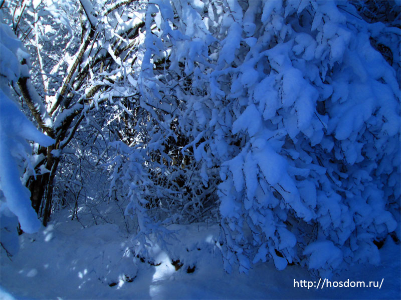 снежная зима утро 22
