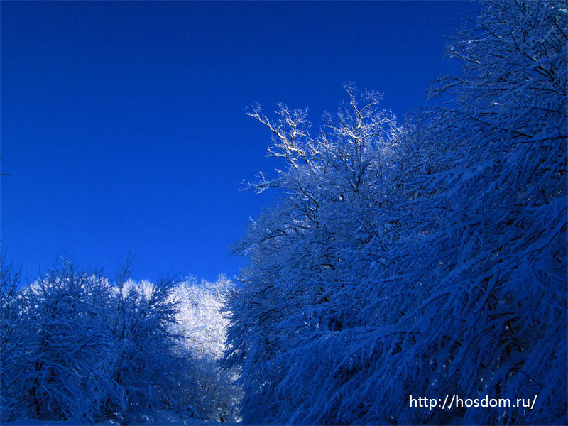 снежная зима утро 23