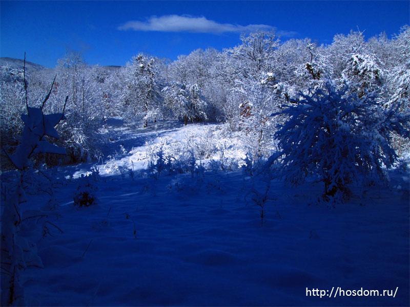 снежная зима утро 24