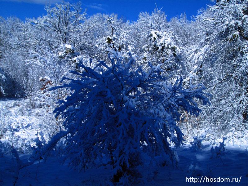 снежная зима утро 25