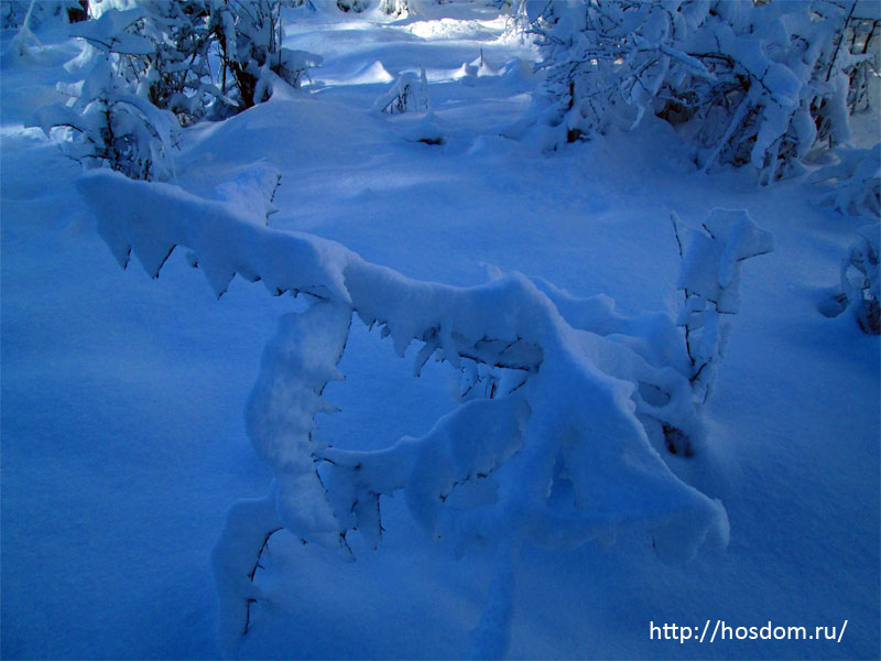 снежная зима утро 8