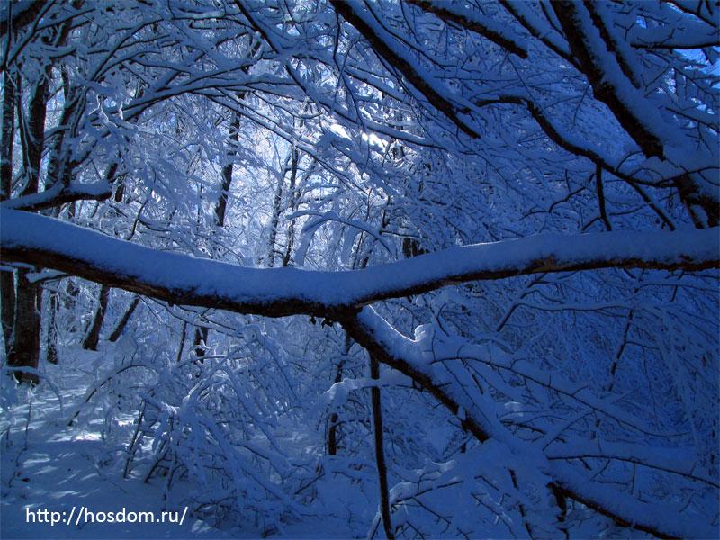 снежная зима утро 10
