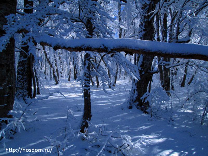 снежная зима утро 12