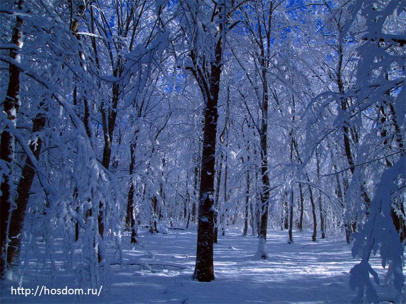 снежная зима утро 11