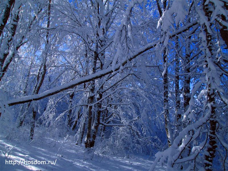 снежная зима утро 13
