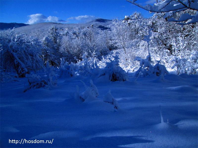 снежная зима утро 14