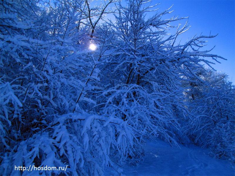снежная зима утро 3