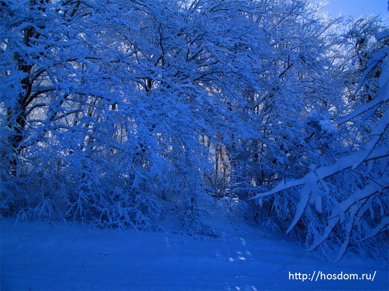 снежная зима утро 4