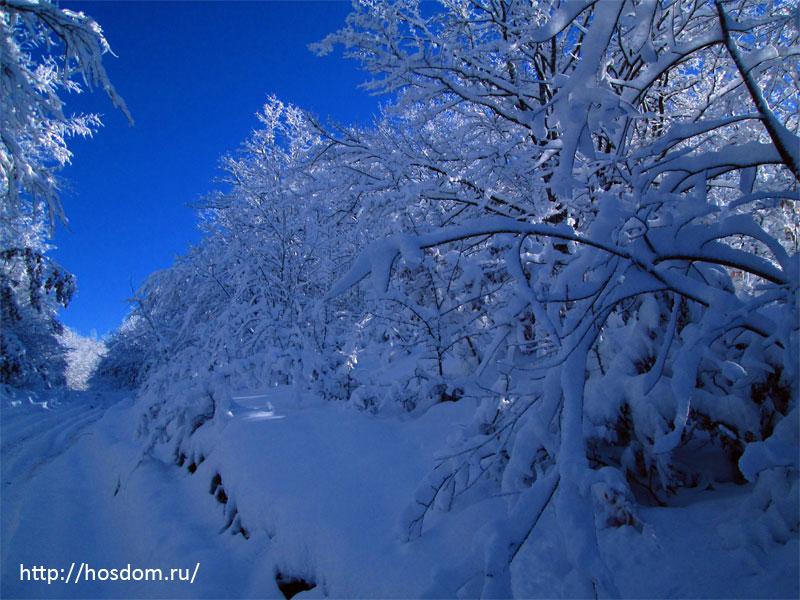снежная зима утро 2