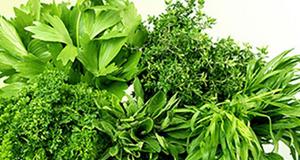 салаты из первой зелени