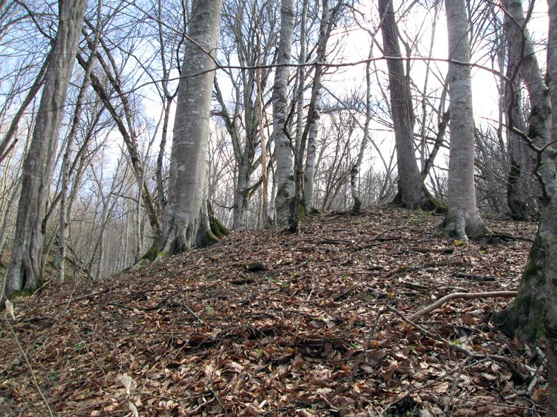 весенний-лес-деревья-3