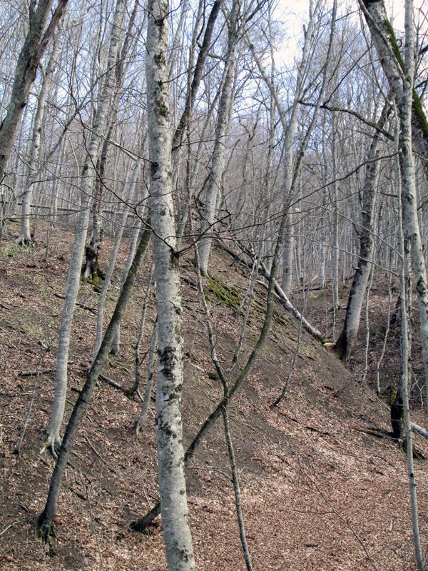 весенний-лес-деревья-4