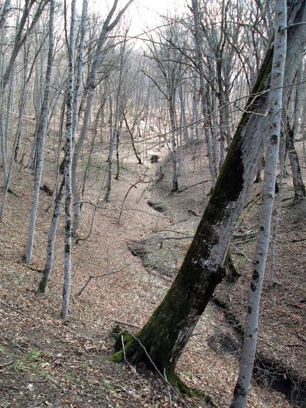 весенний-лес-деревья