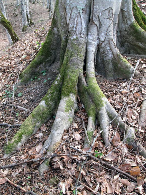 весенний-лес-коряги-2