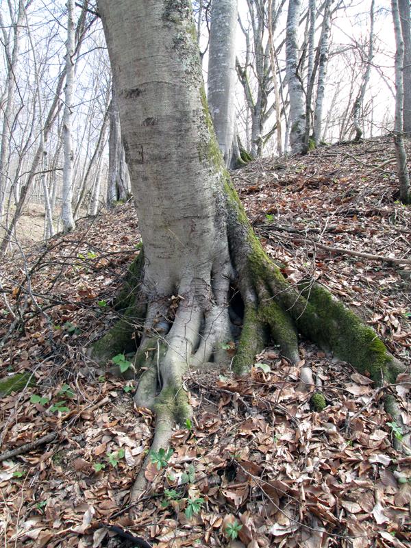 весенний-лес-коряги-3