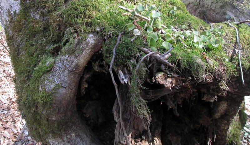 весенний-лес-мох-2