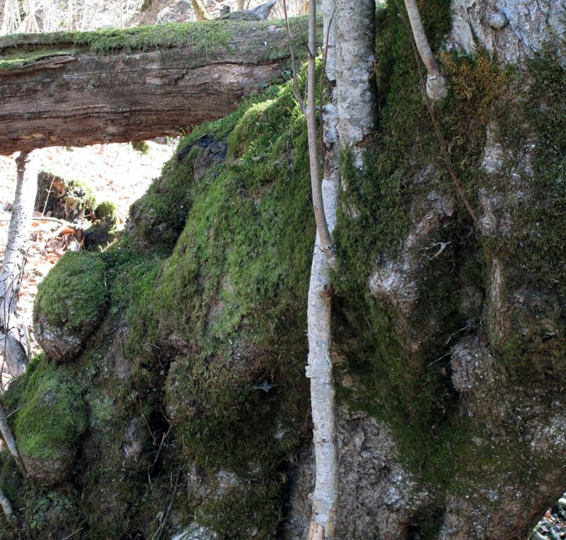 весенний-лес-мох-3