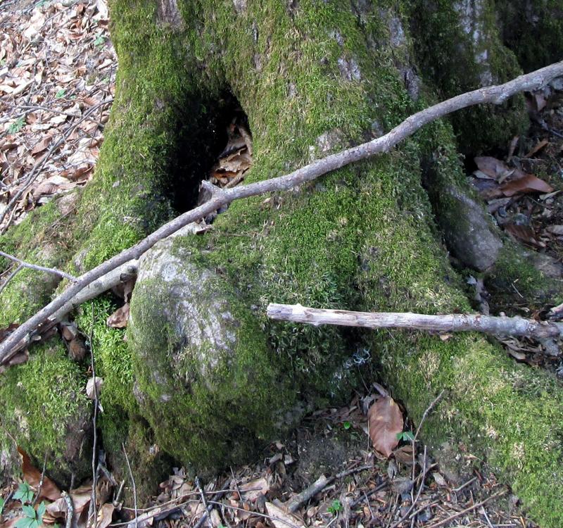 весенний-лес-мох-4