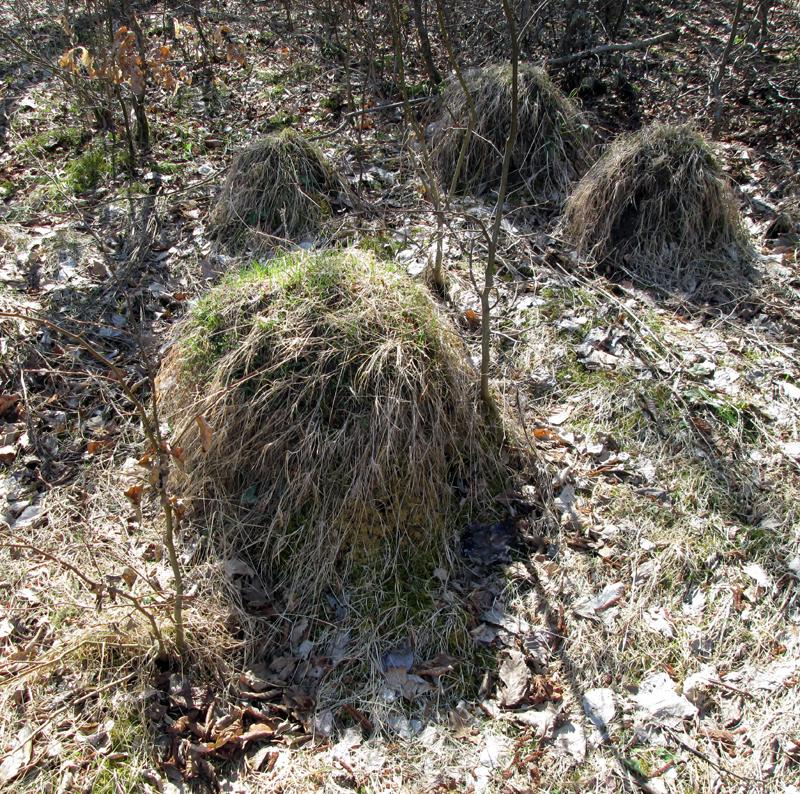 весенний-лес--муравейник-2