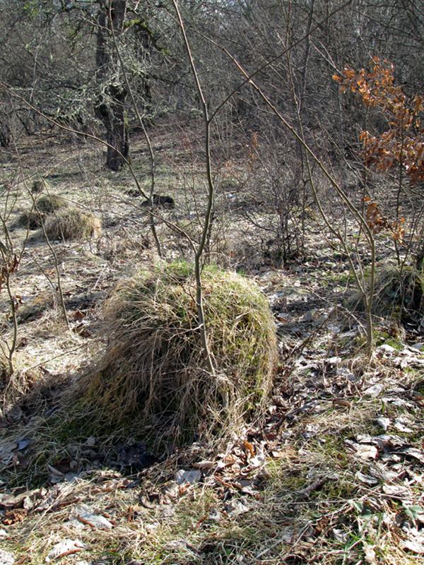 весенний-лес--муравейник-4