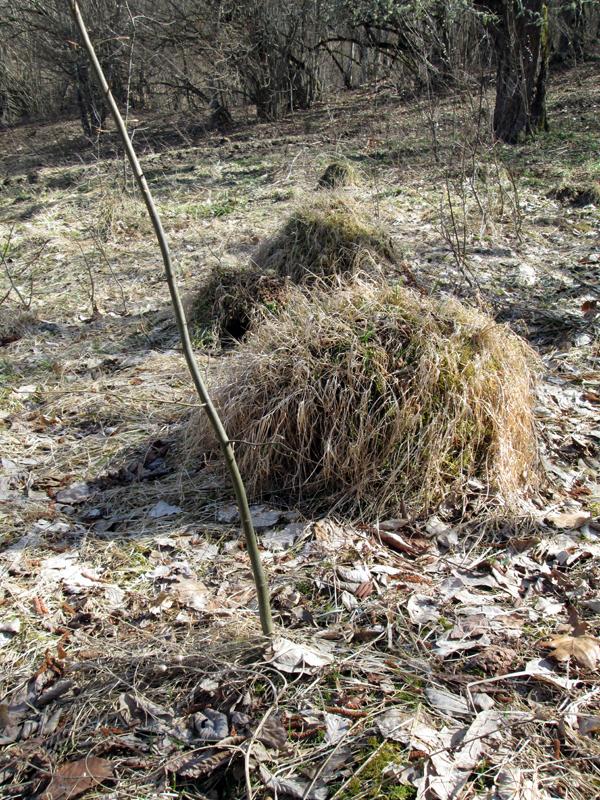весенний-лес--муравейник-5