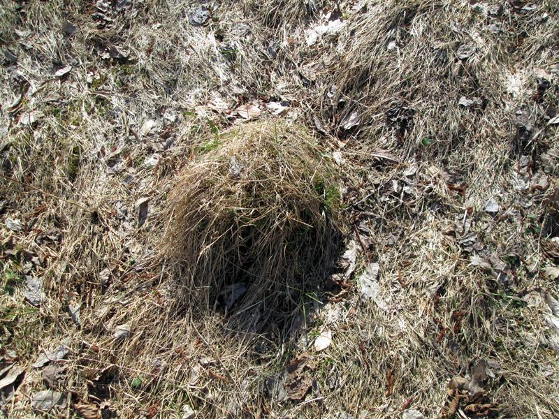 весенний-лес--муравейник-7
