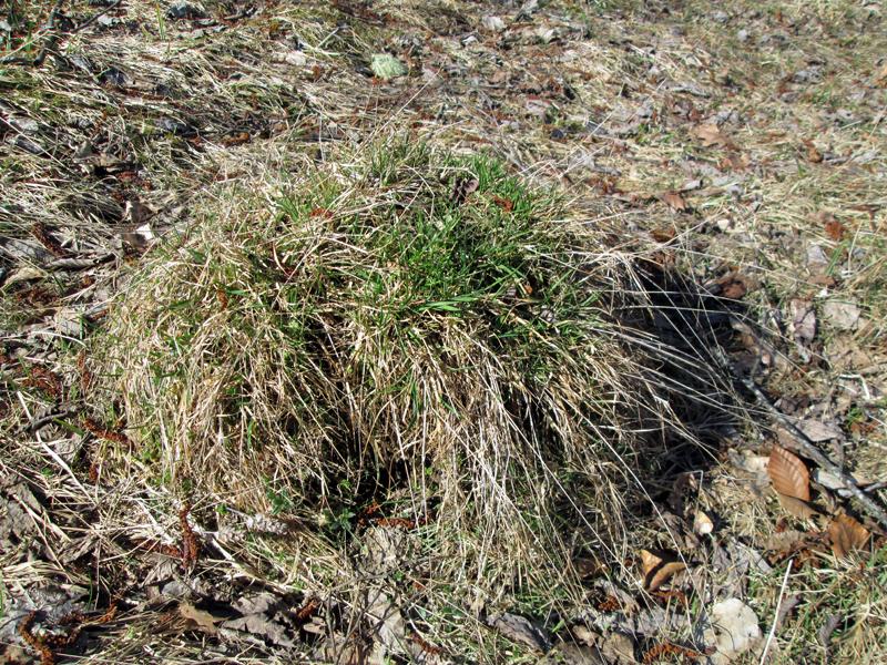 весенний-лес--муравейник
