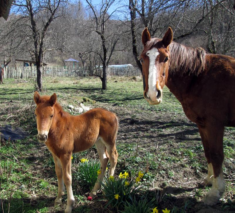 весна-животные-лошадки-2