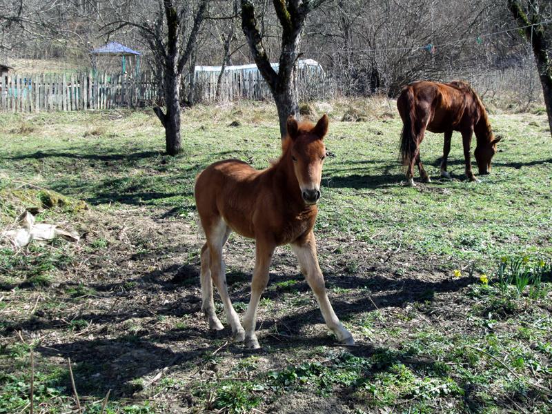 весна-животные-лошадки-3