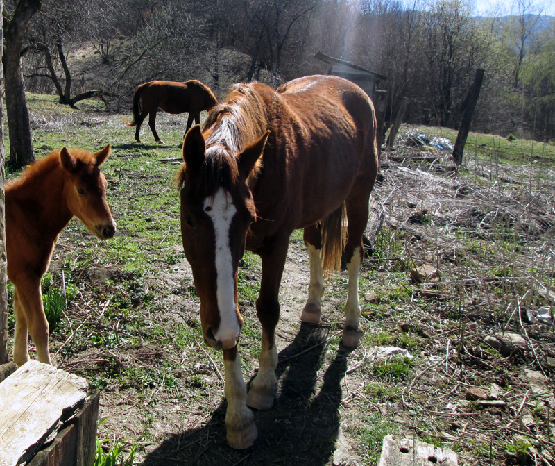 весна-животные-лошадки-5