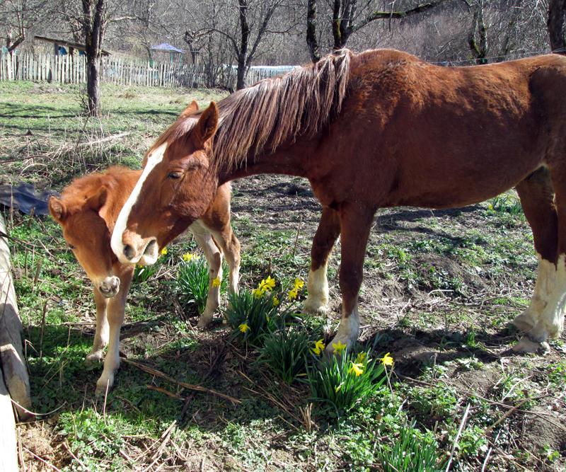 весна-животные-лошадки