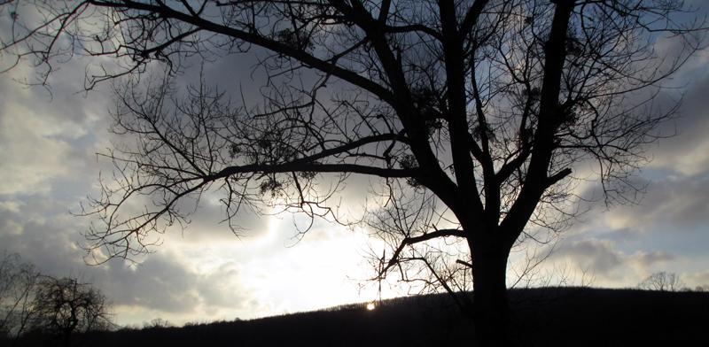 весенний лес вечер 3