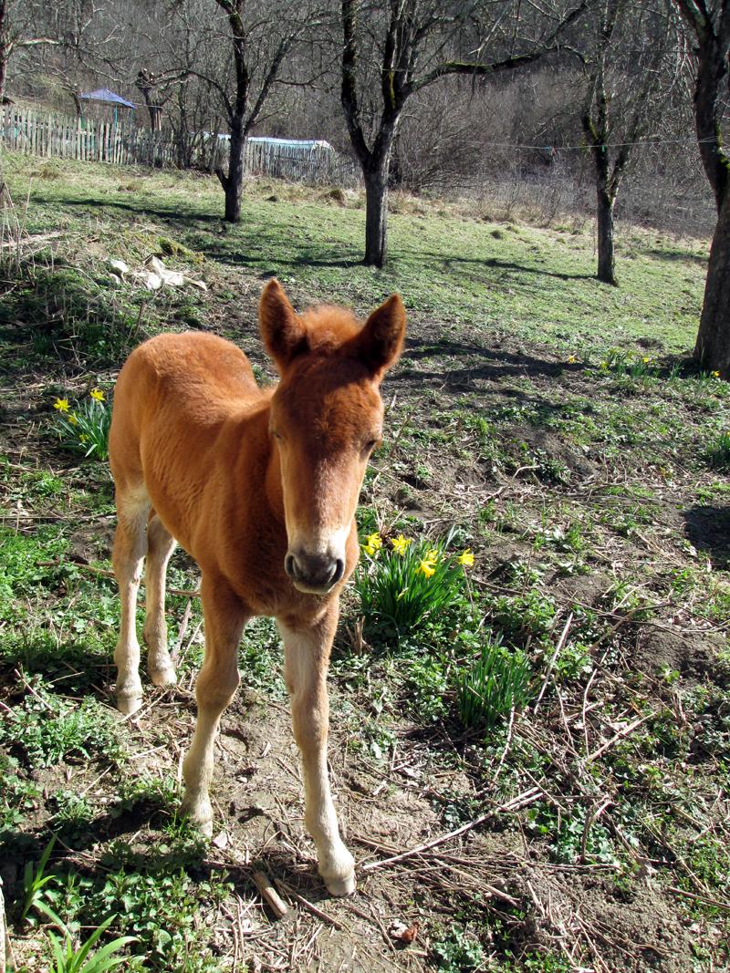 весна - животные