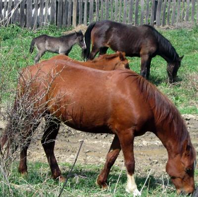 хозяева дома лошади